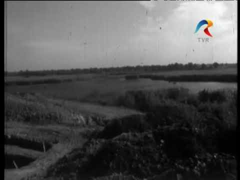 1965. Filmare TVR sit-ul arheologic necropola neo eneolitica de la Caldararu Cernica