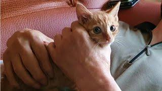 고양이 다 버리라고 하셨던 아버지에게 새끼고양이를 맡겼습니다.