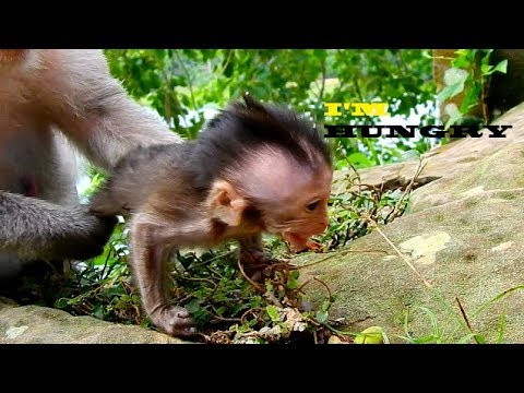 LET'S ME GO AND EAT MOM I AM SO HUNGRY | IF MOM TRUST VO I BELIEVE CHARLEE WILL GROW FASTER
