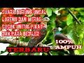 Suara Pikat Burung Uncal Paling Ampuh  Mp3 - Mp4 Download