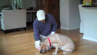 Teaching Your Dog To Lay Down