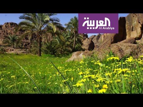 صباح العربية | مغامرات في وادي مشار في حائل  - نشر قبل 4 ساعة