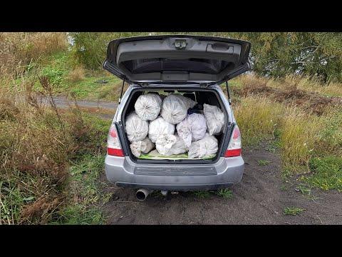 В лесу творится БЕЗУМИЕ! Вывозят грузовиками и прицепами белые грибы!