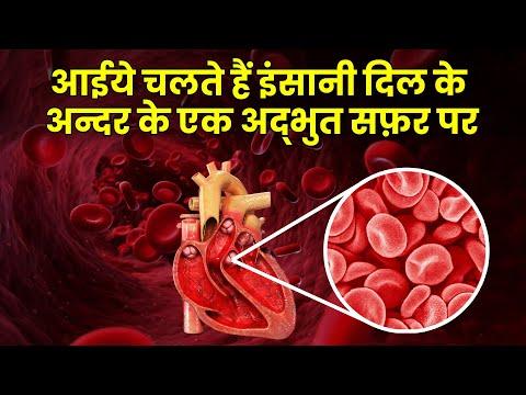 इन्सान के अन्दर झाँककर देखिये दिल कैसे काम करता है Heart Documentary Hindi(Blood circulatory system)