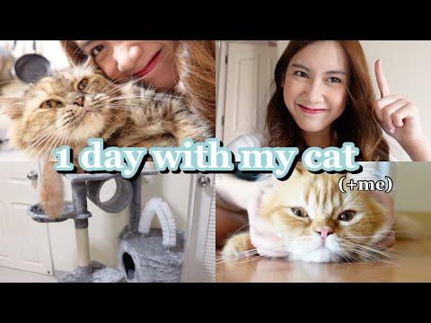 1 day with my cat (+me)♡︎ 1วันรวมเรื่องแมวๆ🐱💜 แนะนำของใช้แมว🐈💘 ซื้อคอนโดแมวใหม่!!!