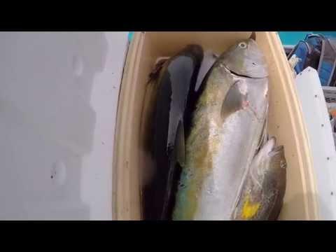 GoPro Yellowtail Fishing in Bahia De Los Angeles 6/25/2015