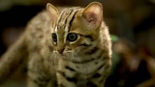 サビイロネコ 世界一小さなネコ 癒し サビイロネコ 検索動画 4