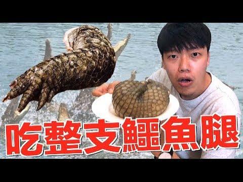 【狠愛演】吃整隻鱷魚腿,重達2公斤『意想不到的口感』