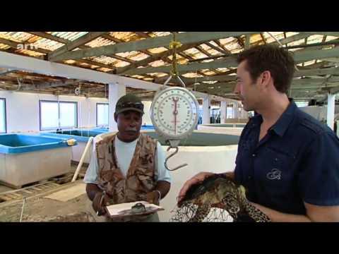 Steffens entdeckt Palau Korallenparadies der Südsee Reportage über Palau