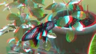 The butterflies 3D anaglyph Full HD 1080p