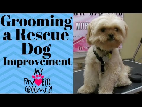 Grooming a rescue dog Jackson