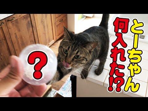 カプセルの中にある物を入れたら猫さんたち大興奮!?