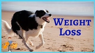 How to put your pet on a diet! The Ultimate Weight Loss Program