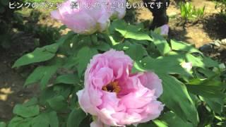 母の日プレゼントとを兼ねて、春に我が家の花壇に咲いた花たちの写真を...
