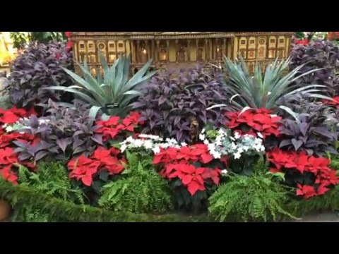 Beautiful Scenery Video of the United States Botanic Garden in Washington, D.C.