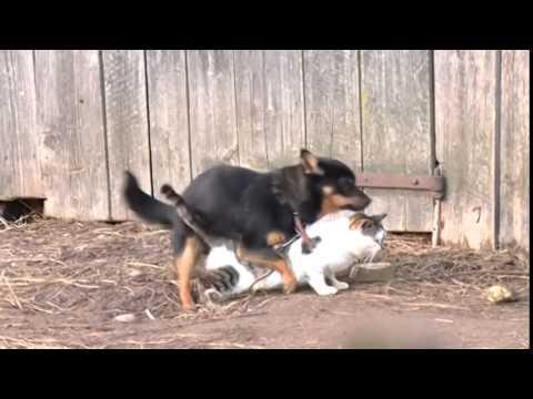 Собака хочет кошку 1 - YouTube