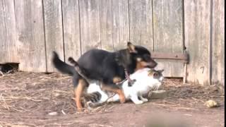 Собака хочет кошку 1