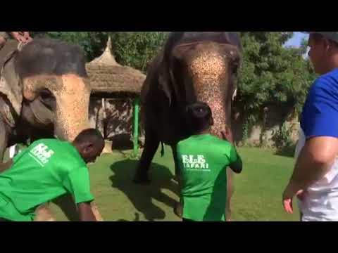 Elesafari washing the elephant