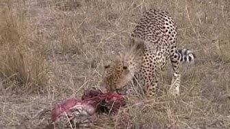 Afrikan  safari eläimiä