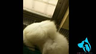 Beautiful baby Girl after bath  this cute Persian kitten's cat available