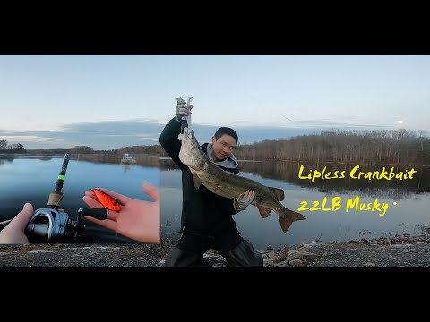 Look At This Monster Of Burke Lake,First Giant Musky(21.9LB) Of 2020./Lipless Crankbait Fishing