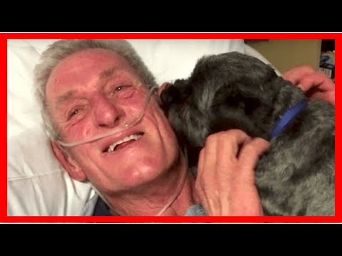 Dog Is Credited With Miraculously Rousing His Human From A Coma| Dog Rescue Stories