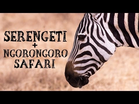G ADVENTURES SERENGETI SAFARI TO ZANZIBAR