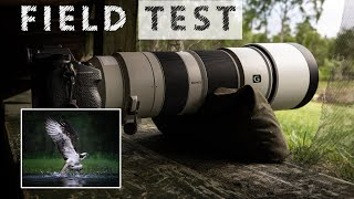 Field test of Sony's 200-600mm lens for wildlife photography