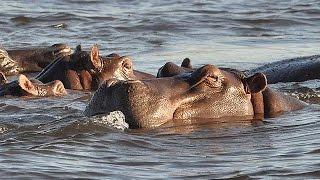アフリカ大陸には野生動物を保護している自然公園などが数多くにあり、...