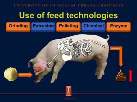 Use of feed technology to improve the nutritional value of feed ingredients fed to pigs