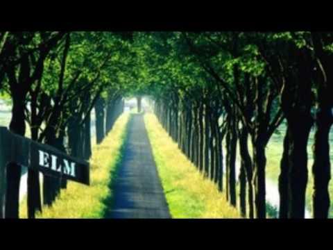 *American Elm Tree* +Native American+Fast Growing Shade Tree+