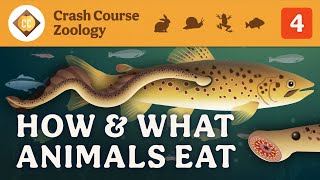 How & What Animals Eat: Crash Course Zoology #4