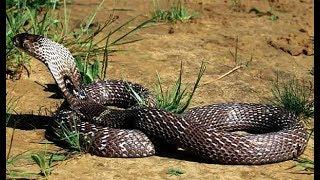 खेत में पड़ा था साप, पास जाके देखा तो होश उड़ गए गांव वालो के