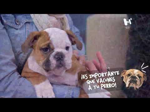 heraldog-por-#elheraldotv:-todo-lo-que-quieres-saber-sobre-tu-perro-y-su-salud.