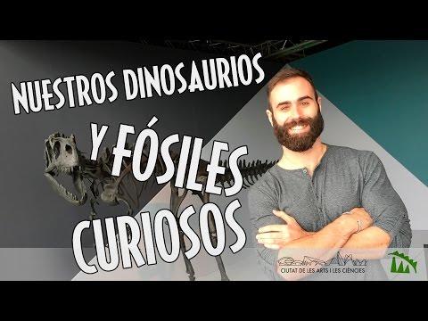 Nuestros Dinosaurios y fósiles curiosos