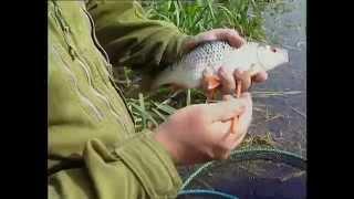 Erfolgreich angeln auf Rotaugen & Rotfedern