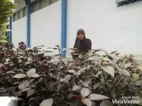 Kanca Anyar saka Jkt eps 1 Dwi Risa A Nur Halimah Rini Agustin Vivi Novita S sandhiwara Jw  9c