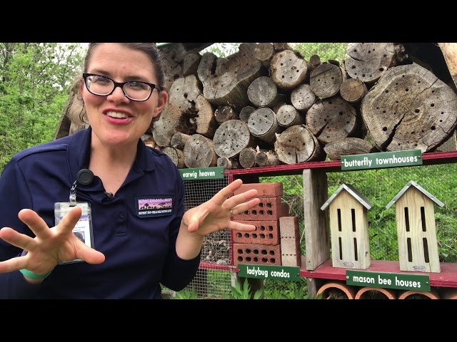 Belle Isle Nature Center | Quick Tips for Pollinators: Insect Houses