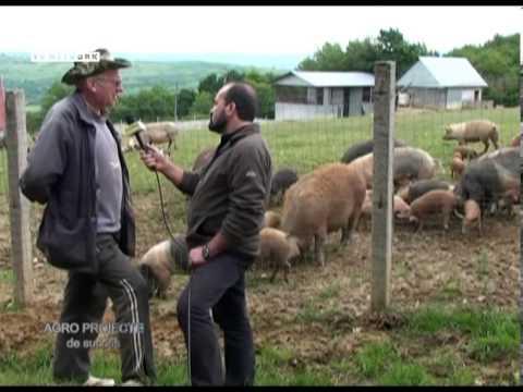 REPORTAJ VIDEO - Europa din varful Dealului Stejara