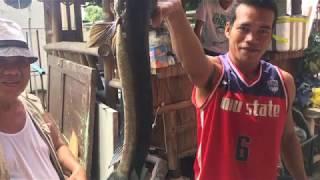 Pamamaril ng Dalag - Olongapo City