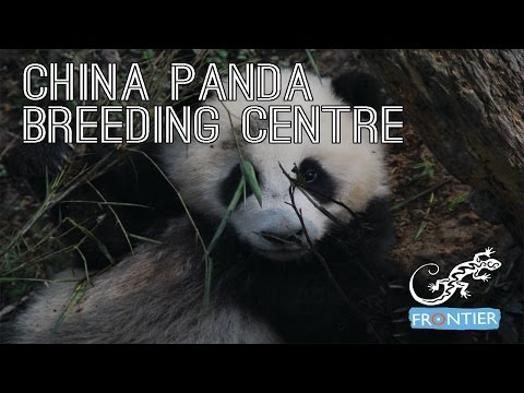 China Panda Breeding Centre
