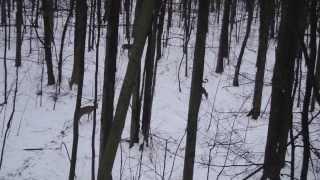 Michigan Deer Hunting- LHR Redemption Muzzleloader Doe Kill 2013