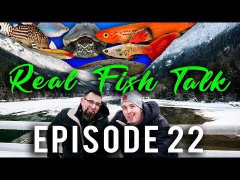 Talking About Our Favorite Aquarium Fish #22