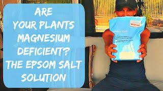 Epsom Salt for Plants - Tomatoes, Peppers & Hibiscus - Magnesium Deficienci in Plants