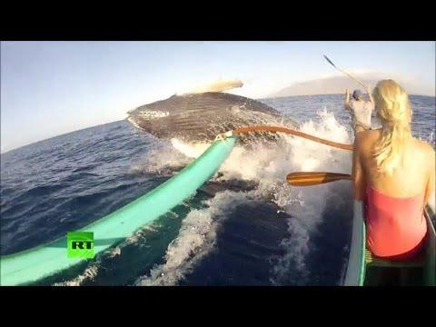 В США кит выпрыгнул из воды и чуть не перевернул лодку рыбаков