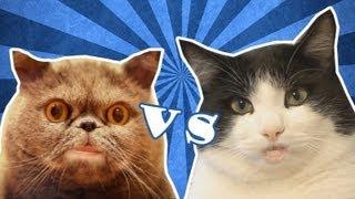 видео кот  сальвадор