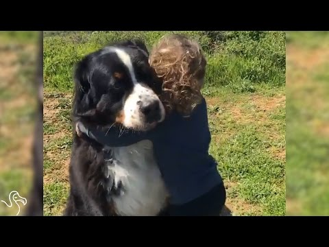 Little Girl Is Growing Up With Two Giant Dogs
