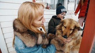 Собака сбежала из дома ради любви