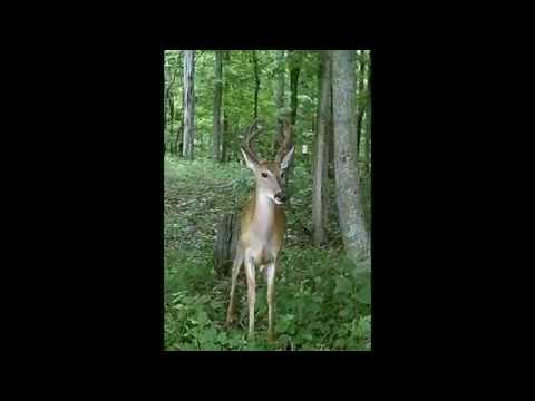 Example Pics Bresser 5 Mp Game Camera Review Youtube