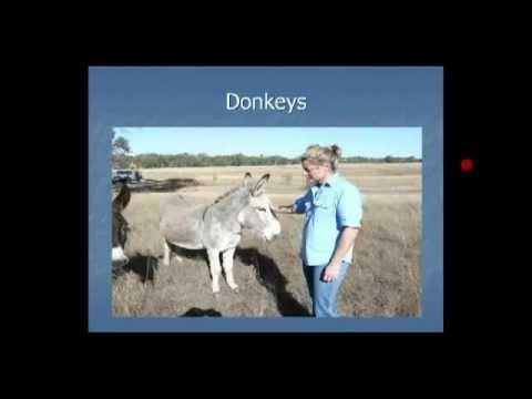 Guardian animals protecting livestock - Donkeys